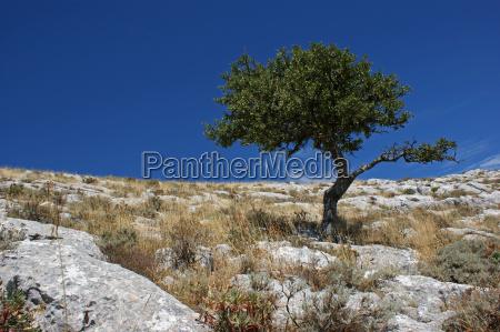 trees on monte albo