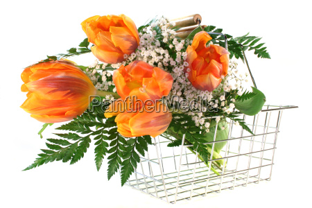bloom blossom flourish flourishing flower flowers
