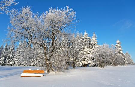 snowy bank