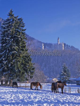 winter at neuschwanstein