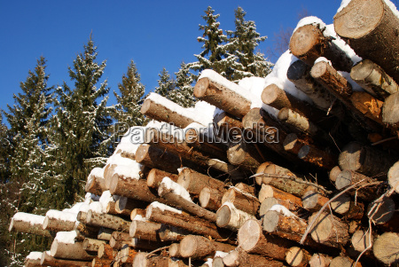 stack of logs in winter spruce