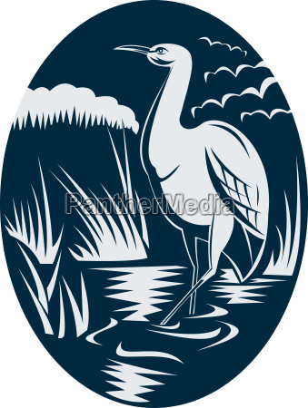 heron wading in the marsh or