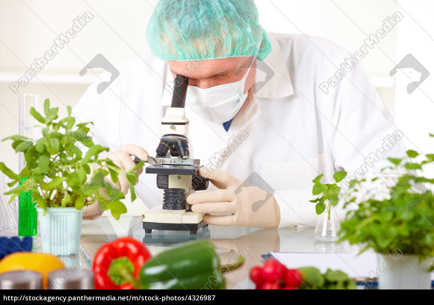 researcher, holding, up, a, gmo, vegetable - 4326987