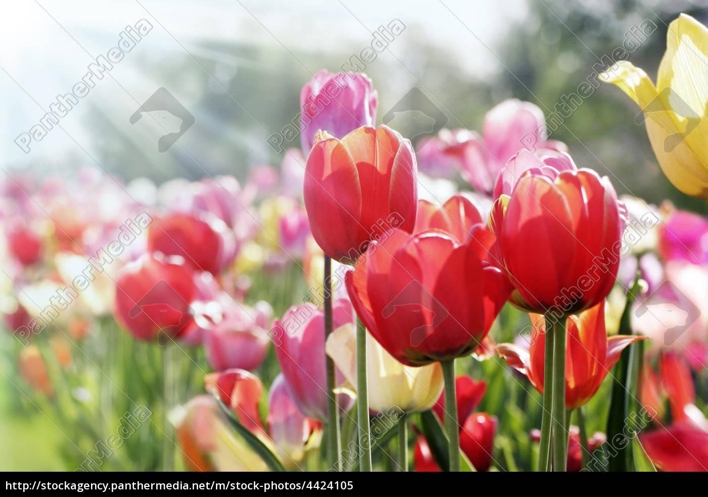 spring, sun - 4424105