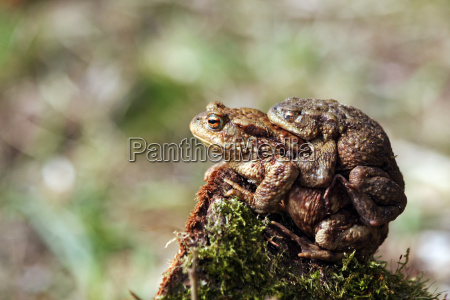 toads at about hike