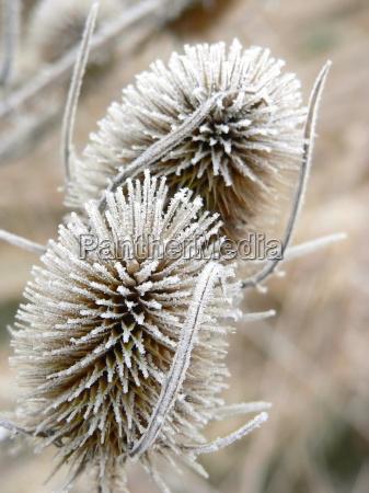 winter field flower flowers plant frost