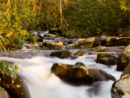 raging stream in spring in smokies