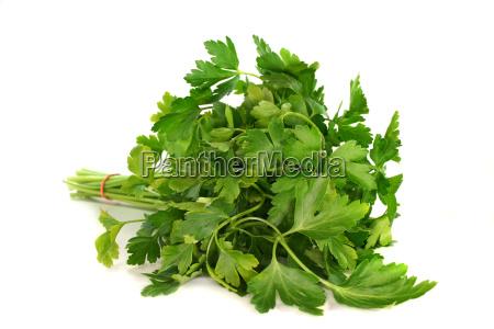 green enclosure league parsley culinary herbs