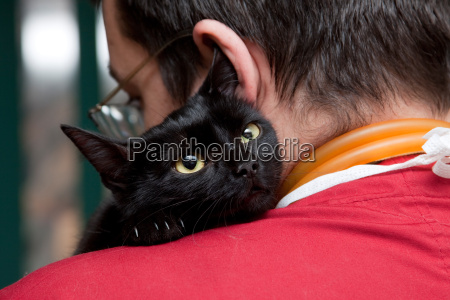 vet caressing cute black cat