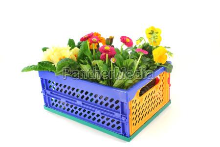 balcony plants in a folding box