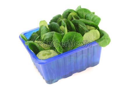 fresh corn salad