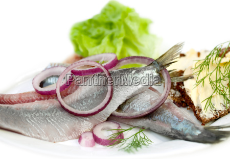 matjes herring