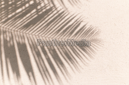 background of sand and palm leaf