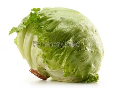 crisphead iceberg lettuce isolated on white