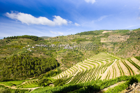 vineyars in douro valley portugal