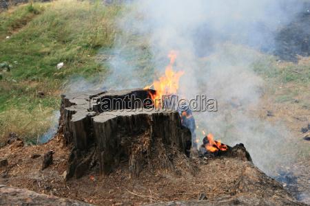 burning tree stump