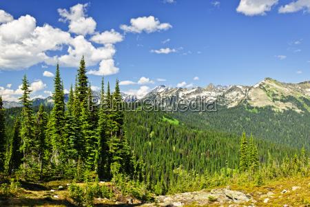 rocky mountain view from mount revelstoke