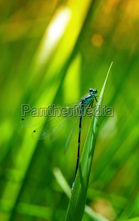 closeup of dragonflies in nature