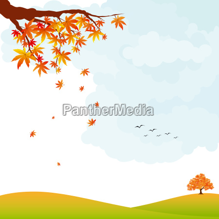 autumn landscape colorful maple leaf and