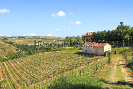 old farmhouse and vineyards in northern