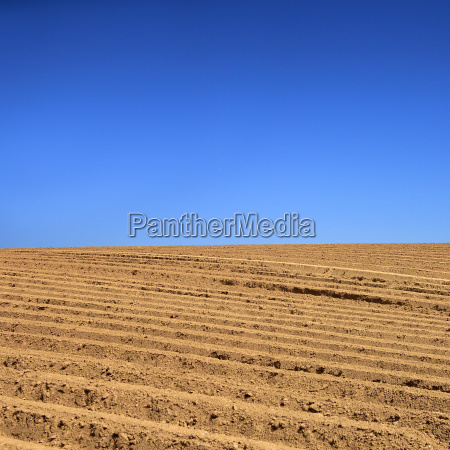 agricultural fields clear 02
