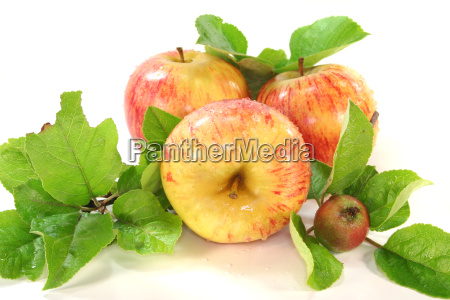 apples, with, leaves - 5012503