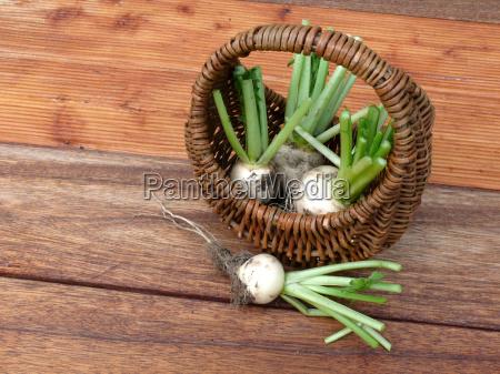 farmland fresh turnip