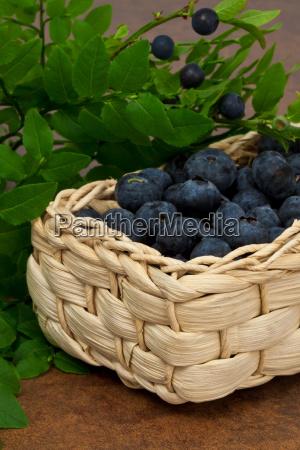 blueberries blueberries