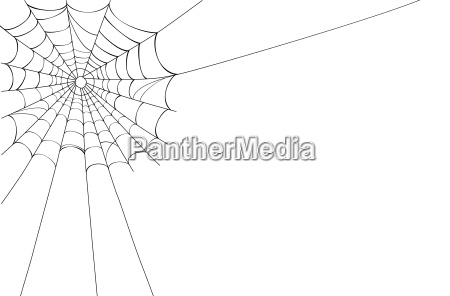 spider web on white