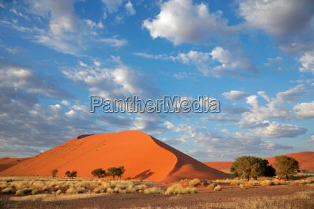 grass dune and sky