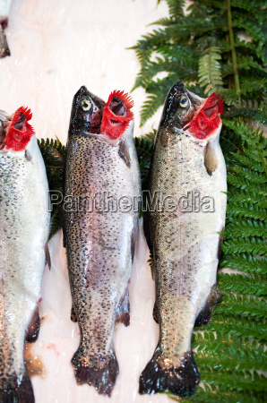 fresh fishes on market stall
