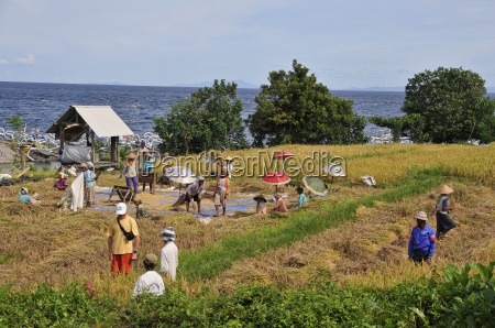 agriculture farming bali indonesia agrarian economy