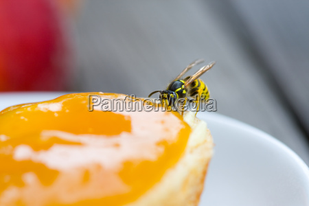 wasp when snacking