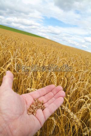 agriculture portrait