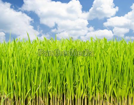 growing fresh grass