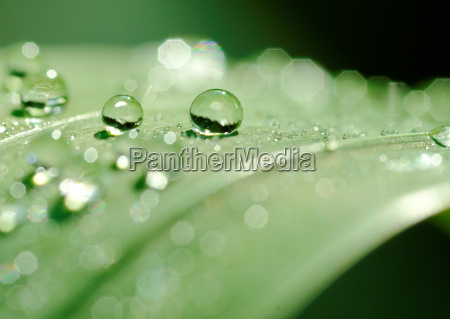 drops and droplets