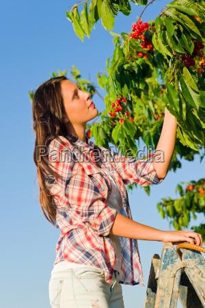 cherry tree harvest summer beautiful woman