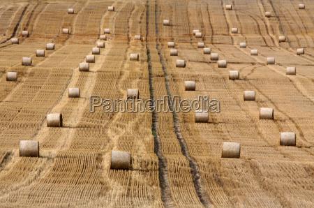 field roll straw ball stubble field