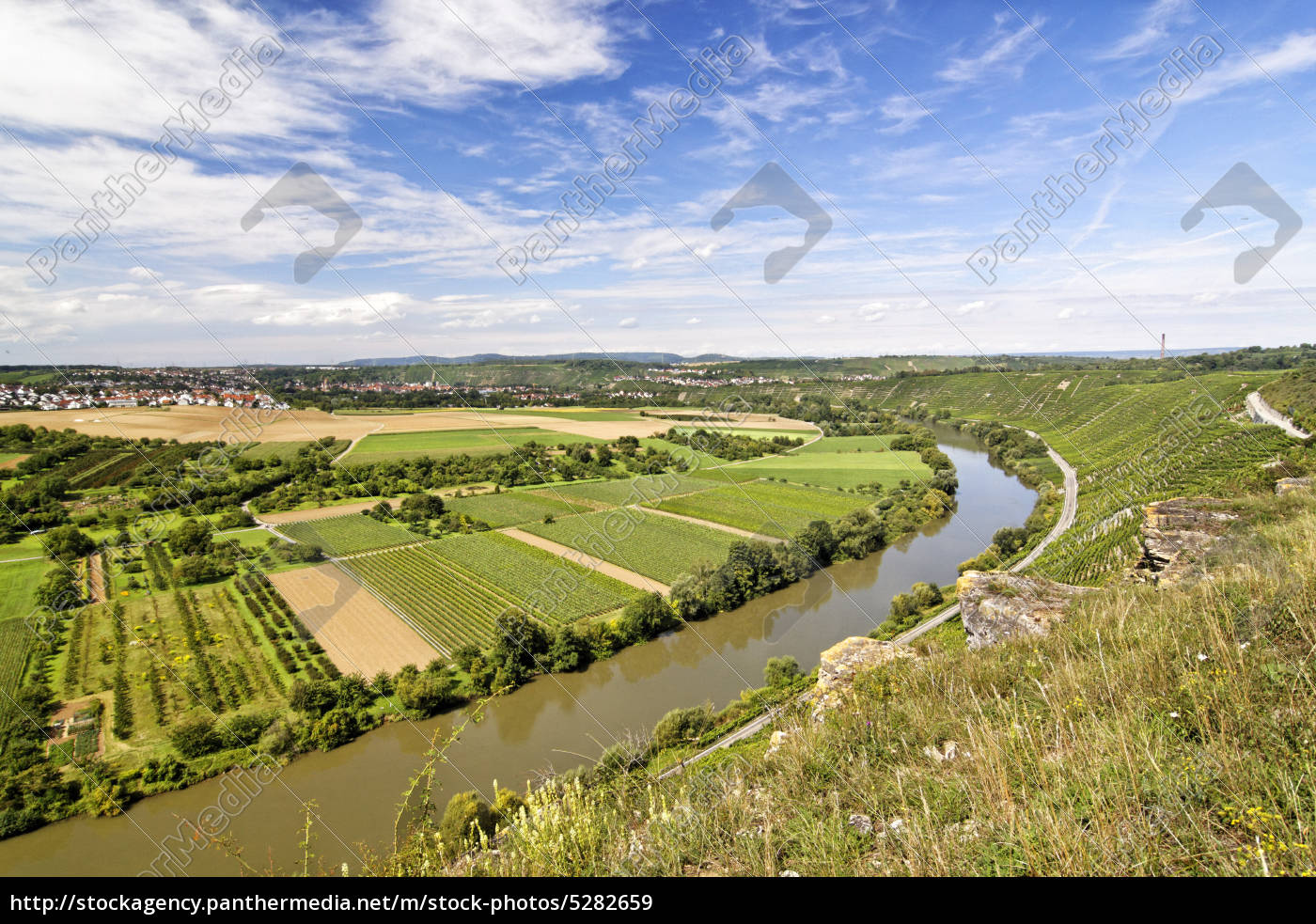 vineyard - 5282659