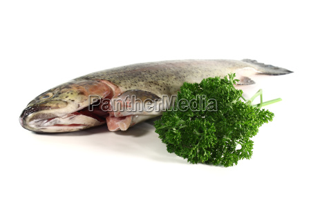 trout with parsley