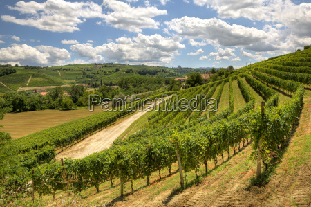 view on beautiful hills and vineyards