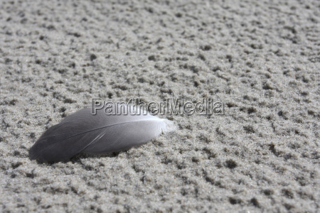 bird feather in the sand