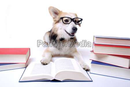 dog is reading book