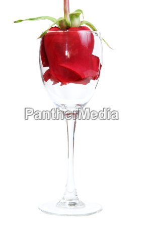 red rose in a glass goblet