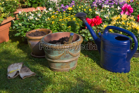 new plants in flowerpots for autumn