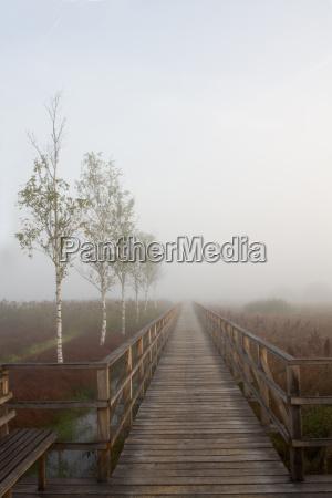 wooden walkway in the moor