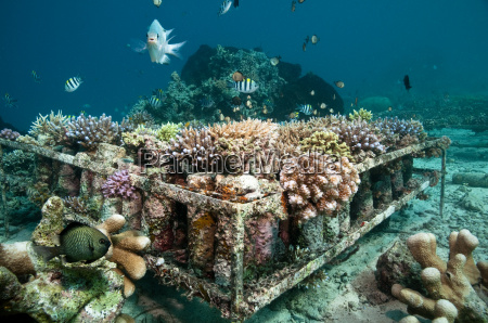 artificial coral reef