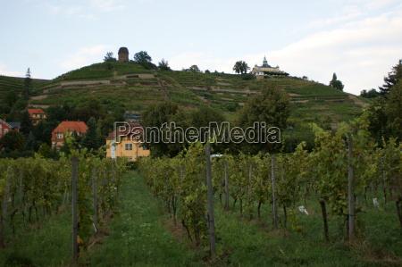 vineyard dig 0164