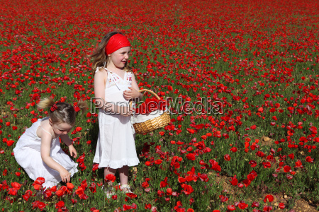 little girls picking flowers in summer