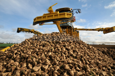 beet cleaning loader